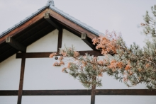 nadine-albert-brand-park-library-japanese-garden-royal-banquet-glendale-orange-county-los-angeles-southern-california-wedding-photographer-3537