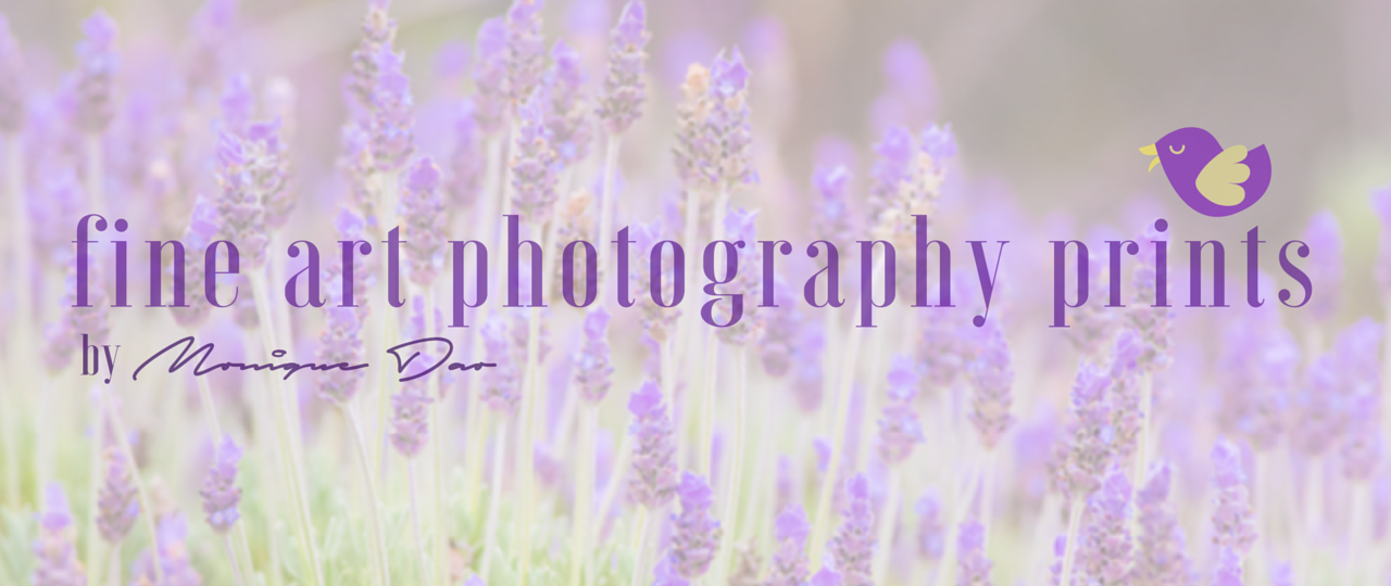 feature-image-etsy-cover-1280x540
