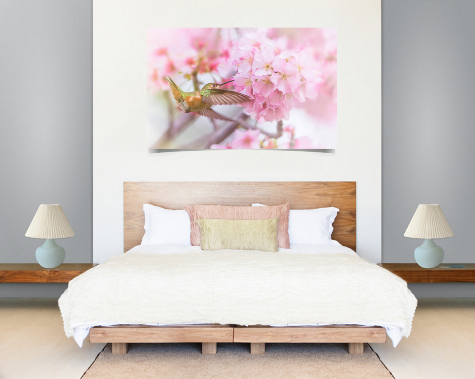 wall-view-hummingbird-sakura-cherry-blossoms