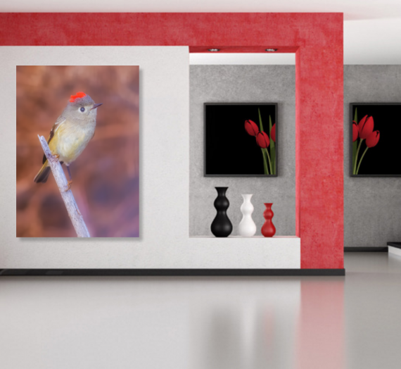 SOLD! Ruby-crowned Kinglet Fine Art Photography Print