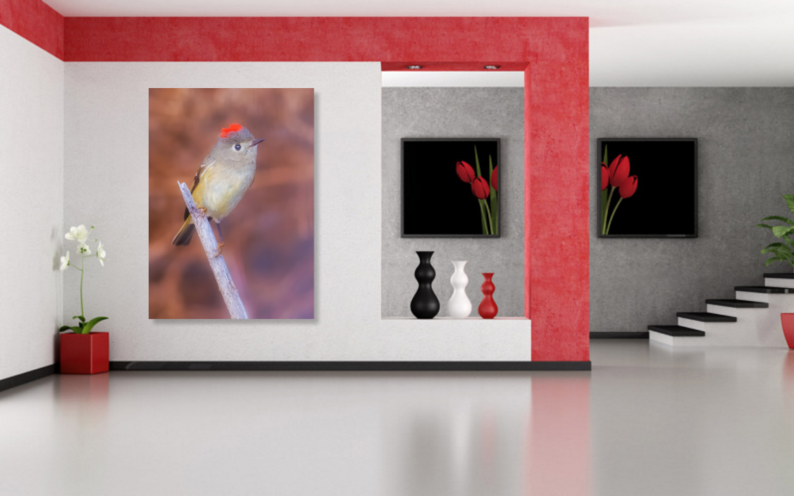 sold-ruby-crowned-kinglet